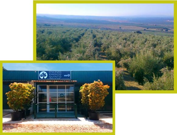 Nuestro olivar y fábrica Encinas Montequinto